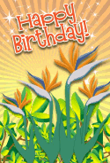 Bird of Paradise Birthday Card